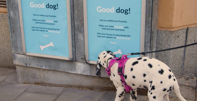 köpeklerin bakmadan geçemediği veteriner reklamı